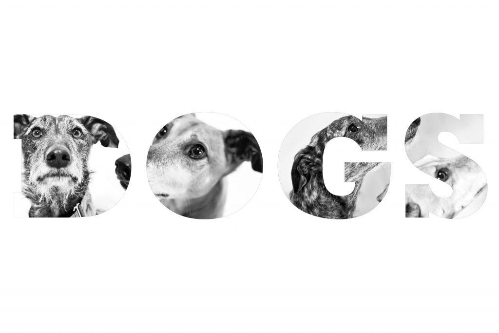 dogie1