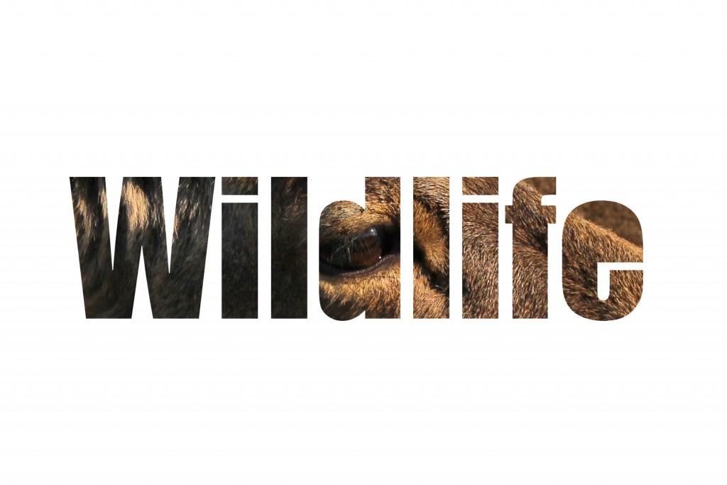 wildlifegall1